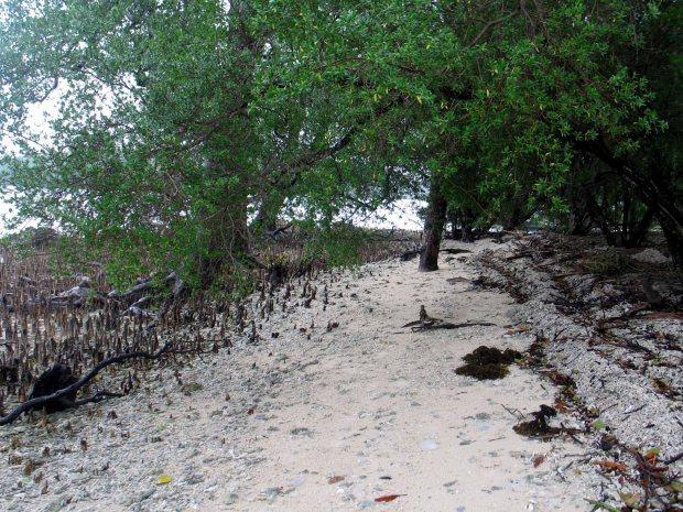 pulau handeleum (20)