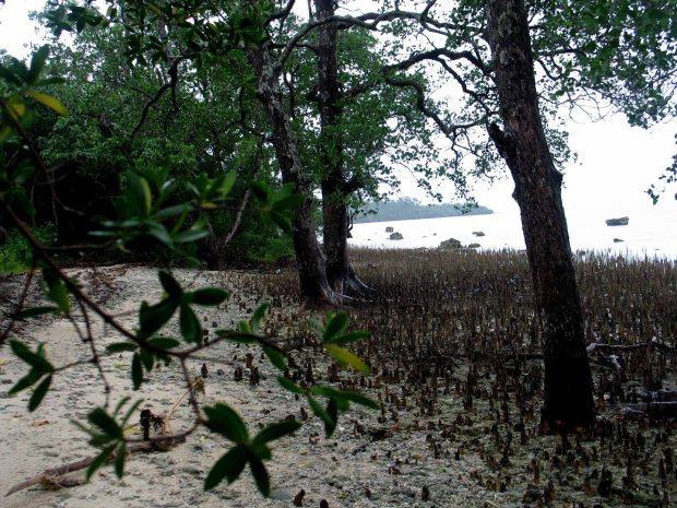 pulau handeleum (21)